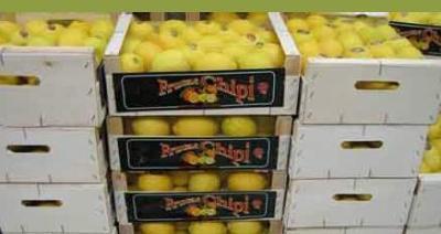 Packed lemons Image