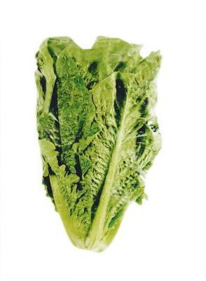 Romana variety lettuce