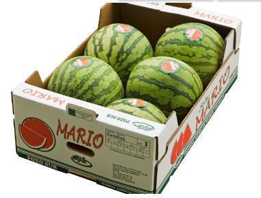 Seedless water melon