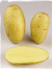 Adriana variety potato