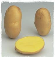 Sour variety potato