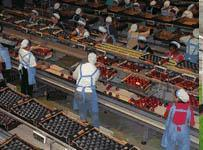 Agrifood services