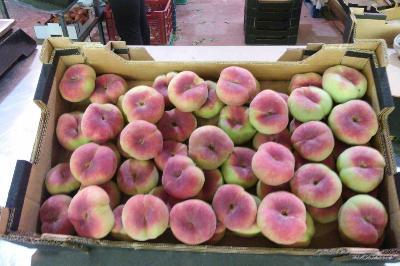 Organic paraguayan