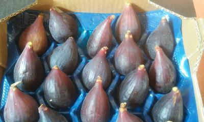 Organic fig