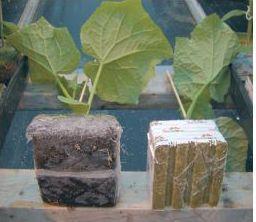 Plant's seeds