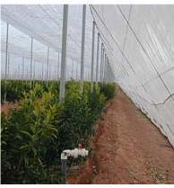 Greenhouse mesh