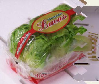 Hearts of lettuce