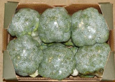 Broccoli filmed