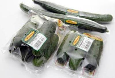 Cucumber Spanish, Dutch cucumber