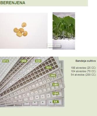 Egg plants