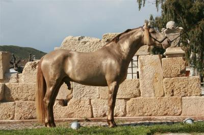 Stallions and mating horses