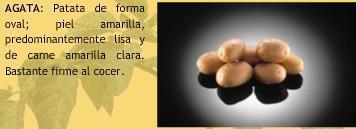 Potato variety Ageda