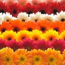 Cut flowers.