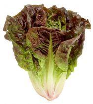 Crest lettuce