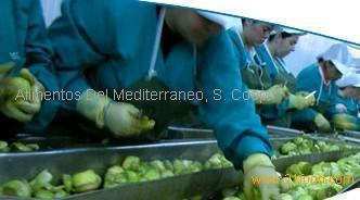 Production of canned artichoke