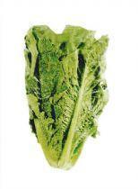 Romana lettuce