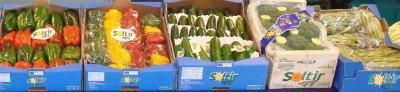 Artichoke, broccoli, peppers clovi, California pepper, zucchini, green melon, cantaloupe
