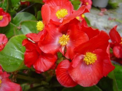 Seasonal plants