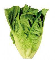 Little gem lettuce hearts