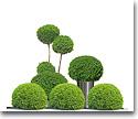 Plantas vivas y productos de floricultura
