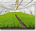 Tecnología agrícola