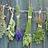 Plantas medicinales y aromáticas