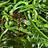 Cultivo de algas