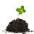 Bulbos, plantones y plantas en general
