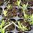 Semillas/semilleros en general para tecnologia agraria