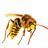Lucha biologica (insectos depredadores para la agricultura ecologica)