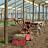 Maquinaria viveros y semilleros de tecnolgía agraria