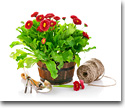 Living plants and floriculture products