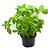 Living plants in general