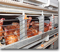 Cages and accessories for animal production