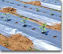 Film plastics for farming technology
