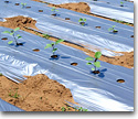 Film plastics for farming technology