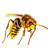 Biological control (against predaceous insects attacking crops)