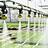 Organic irrigation for farming technology