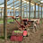 Nursery and seedbed machinery for farming technology