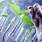 Agro-foods analysis laboratory