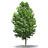 Decorative trees